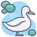 animal, duck, goose, poultry icon