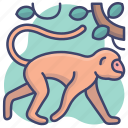 animal, baboon, monkey, zoo icon