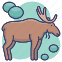 animal, elk, moose, zoo icon