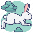 animal, bunny, hare, rabbit