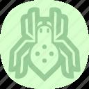 beetle, bug, spider, virus icon