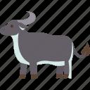 buffalo, calf, cattle, mammal, animal