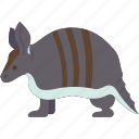 armadillo, armor, shell, wildlife, chordata