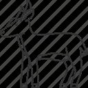 barking, deer, muntjac, fawn, antler