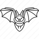 bat, nocturnal, cave, mammal, echolocation