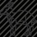 chevrotain, fawn, doe, ungulate, hoof