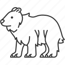 bear, grizzly, wildlife, mammal, animal