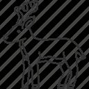 deer, wildlife, stag, antlers, herbivore