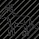 donkey, mule, cattle, livestock, domestic