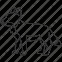 fox, wildlife, predator, mammal, animal