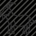 goat, cattle, livestock, domestic, dairy