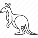 kangaroo, marsupial, wildlife, mammal, australia