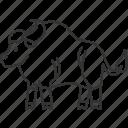 seladang, bison, bull, wildlife, mammal