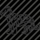 tiger, panther, carnivore, predator, jungle