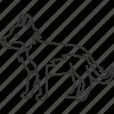 wolf, canine, wildlife, predator, carnivore