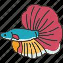 betta, fish, siamese, fighting, freshwater