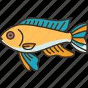 cichlid, fish, aquarium, freshwater, animal