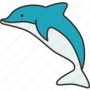 dolphin, marine, aquatic, mammal, wildlife