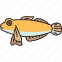 goby, fish, freshwater, fishing, food
