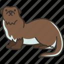 otters, wildlife, aquatic, mammal, animal