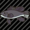 sea, bass, fish, ingredient, food