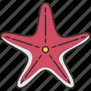 starfish, sea, beach, marine, fauna