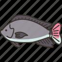 tilapia, fish, freshwater, ingredient, food