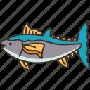tuna, fish, seafood, fishing, marine