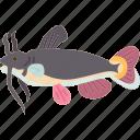 catfish, fish, freshwater, food, animal