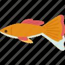 guppy, fish, aquarium, freshwater, tropical