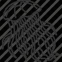 jellyfish, underwater, marine, fauna, aquatic