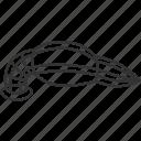 leech, bloodsucker, worm, annelid, animal