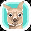 animal, australia, kangaroo, mammals, wildlife, zoo