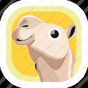 animal, arab, camel, dessert, egypt, wildlife, zoo icon