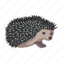 animal, hedgehog, mammal, realistic, wild, zoo icon