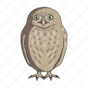 animal, bird, night, owl, predator, wild, zoo icon
