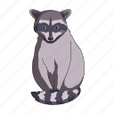animal, mammal, raccoon, wild, zoo icon