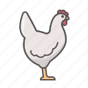 animal, chicken, poultry icon