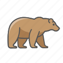 animal, bear, wild icon