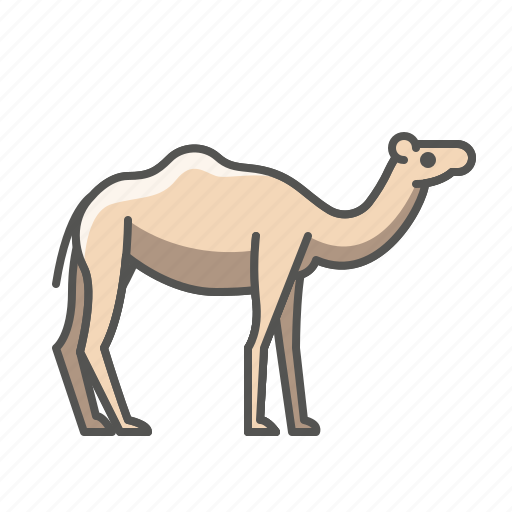 Animal, camel, wild icon - Download on Iconfinder