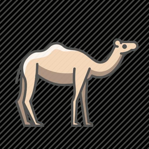 animal, camel, wild icon