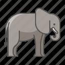 animal, elephant, wild