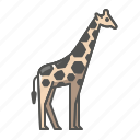 animal, giraffe, wild