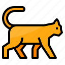 animals, cat, mammal, pet icon