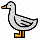 animals, aquatic, birds, duck icon