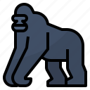 africa, animals, gorilla, wild icon