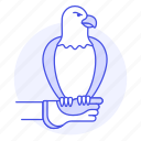 1, animal, bald, bird, birds, eagle, fauna, gauntlet, of, prey, vertebrate icon
