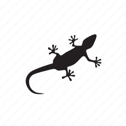 animals, lizard icon