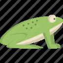 frog, animal, rain, water