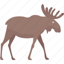 moose, animal, forest, wild icon